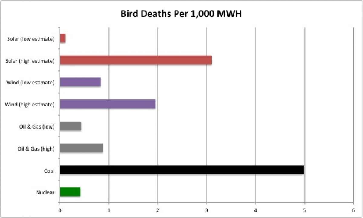 Vogel sterfte per 1000 mwh