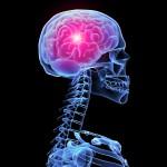 3 mythes over het brein die iedereen gelooft