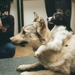 3 bizarre wetenschappelijke experimenten met dieren