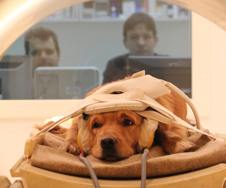 Hond in MRI machine