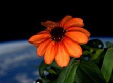 Ruimte bloem