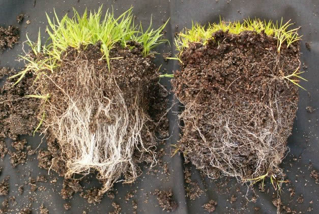 Mycorrhiza met en zonder