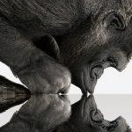 Nieuwe versie van Gorilla Glass klaar voor de markt